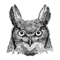 Light Owl.png