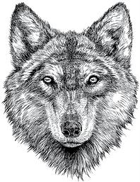 Ligt Wolf.png