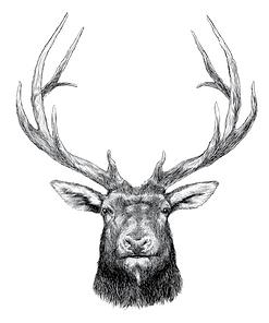 Light Elk.png