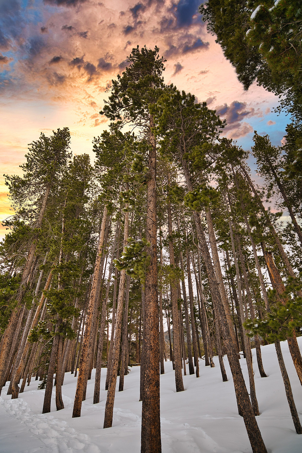 Sunset photo with trees at Rocky Mountain National Park in Colorado