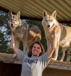 Volunteer spending time with wolves