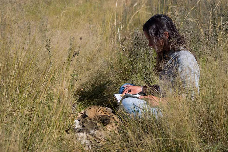 Volunteer sitting with our cheetah