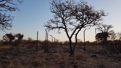 Serval/Caracal Enclosures