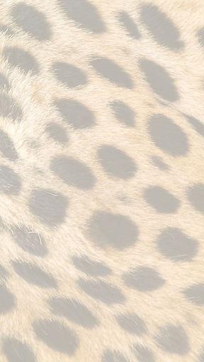 Cheetah%20Print_edited.jpg
