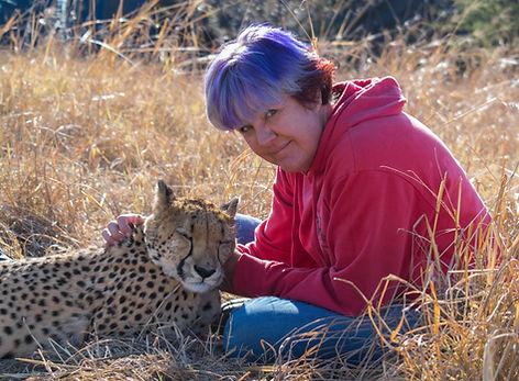 Volunteering spending time with cheetah