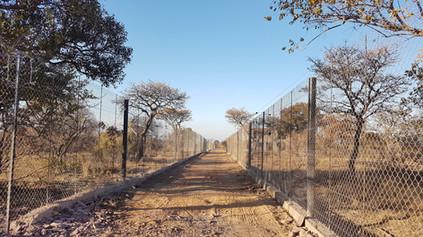 Cheetah Passage