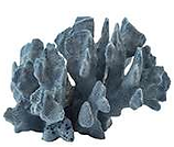 blue coral .png