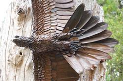 Healesville Sanctuary Steel Eagle