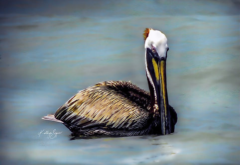 """""""Mr Pelican Blue"""" by Kathryn Seguin Photography"""