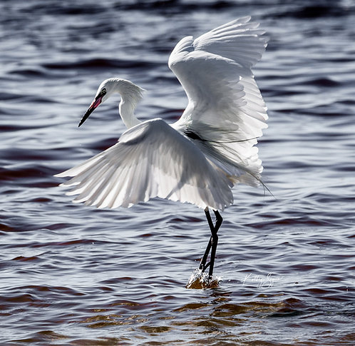 """""""Wingspread"""" by Kathryn Seguin Photography"""