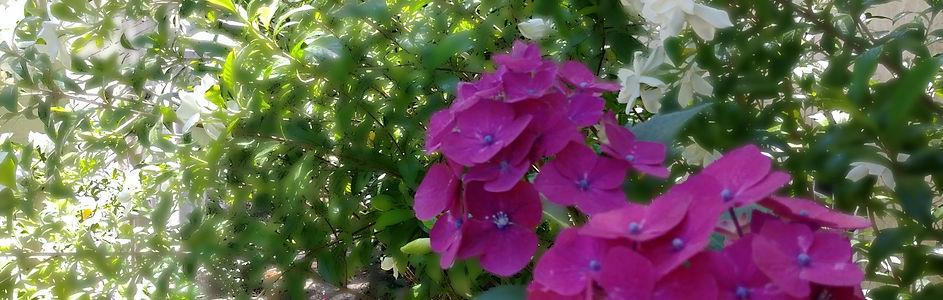 Pink gardenias and white azaleas