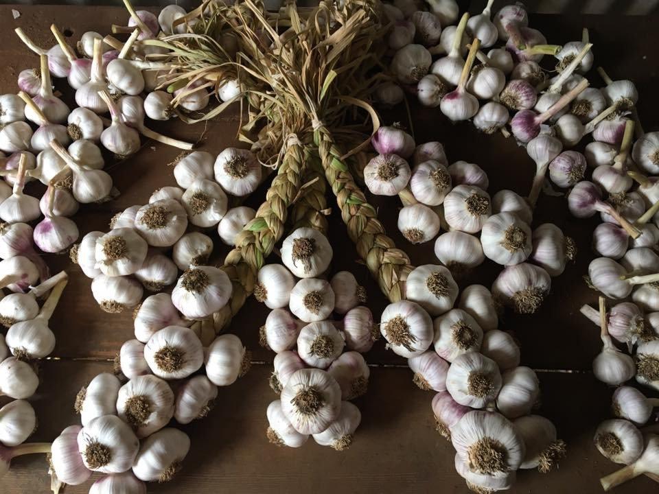 Braided Garlic_edited.jpg