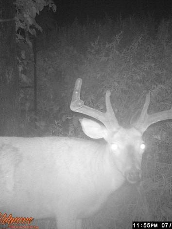 Elite LI Whitetail Hunting