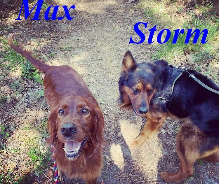 Max-Storm.jpg