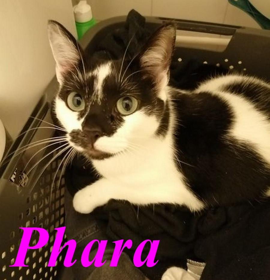Phara.jpg