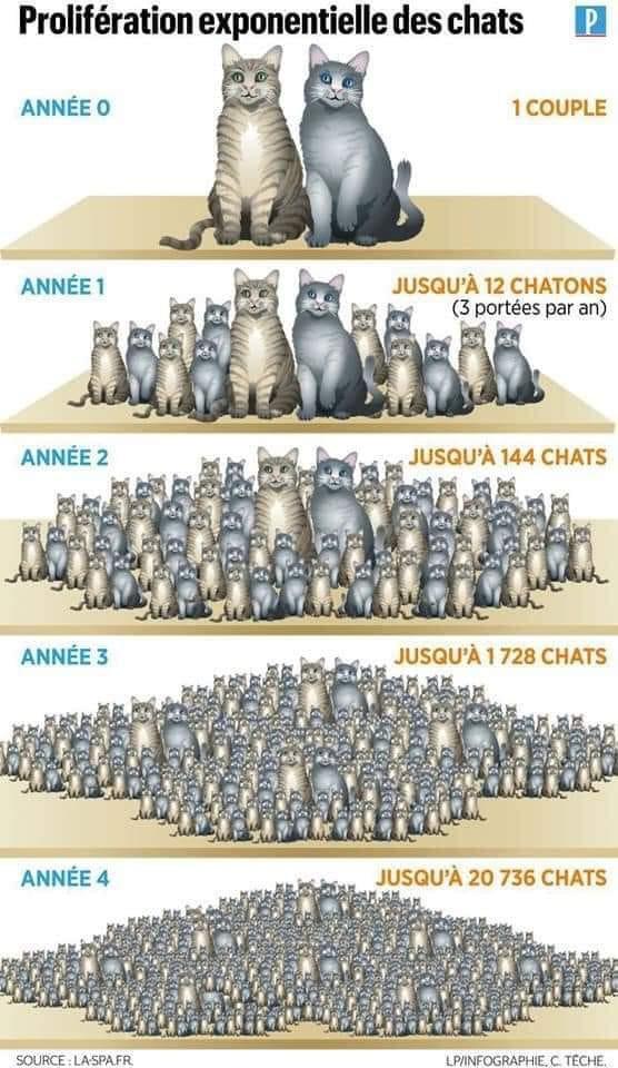 chats.jpg