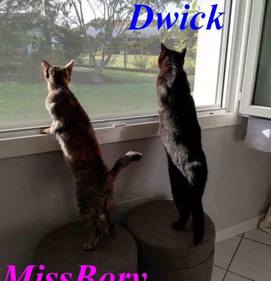 Dwick-MissBory.jpg