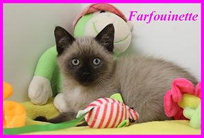 Farfouinette.jpg