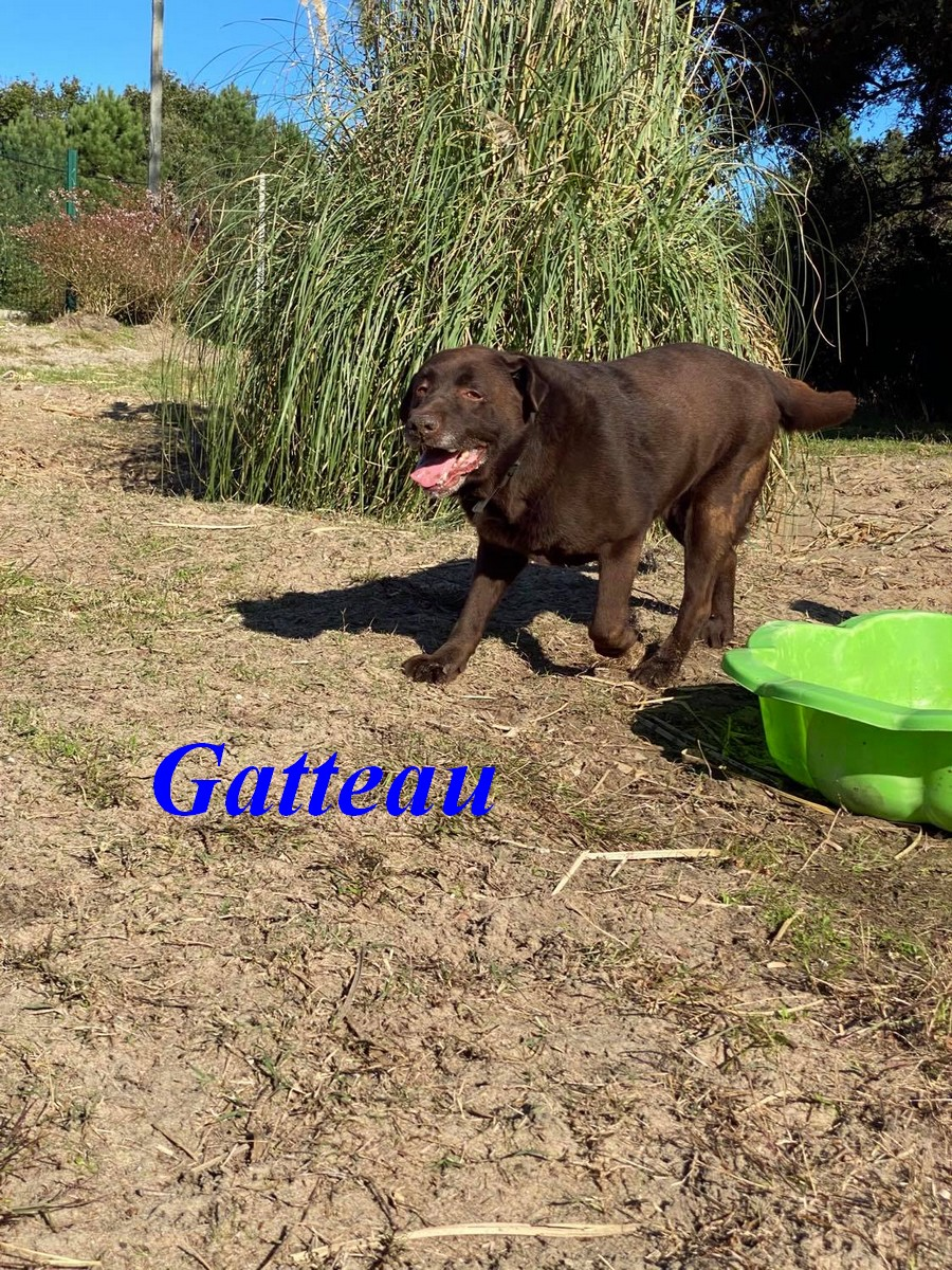 Gatteau