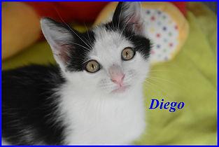 Diego.jpg