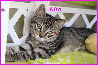 Kira.jpg