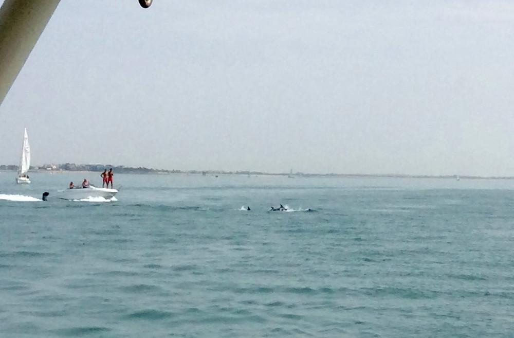 Des dauphins juste derrière nous !