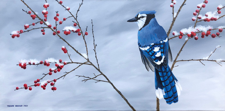 Red Berries Blue Jay