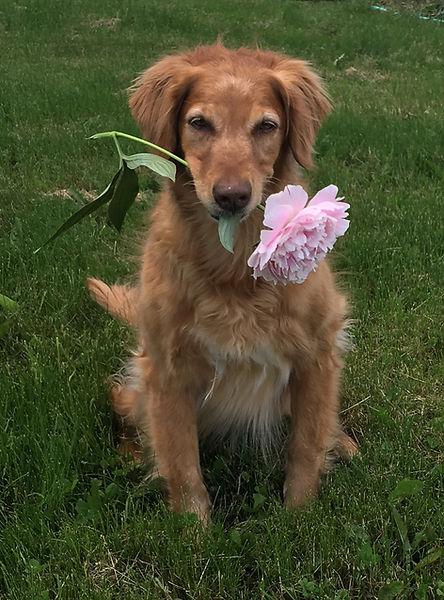 Fanny With Flower June 2018.jpg
