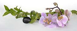 orchid-2115260_1920_web.jpg