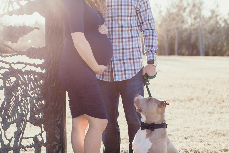 regina Maternity Photographer, regina maternity photography, regina photographer, balgonie photographer