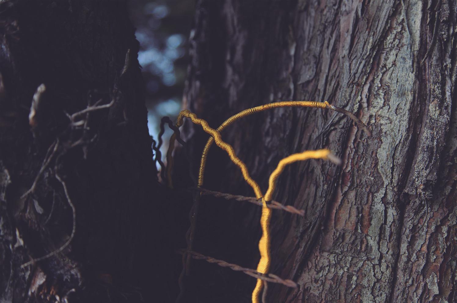 Andrea Marín Titulo: Cerca, muy cerca. Serie, pieza No. 1 Técnica: Serie, Fotografía digital C-Print Registro de Intervención en árboles del campus de la Universidad Nacional Hilos bordean la cerca de alambre incrustada en las cortezas de árbol por crecimiento natural de su tronco. Dimensiones: 50x36 Año: 2018