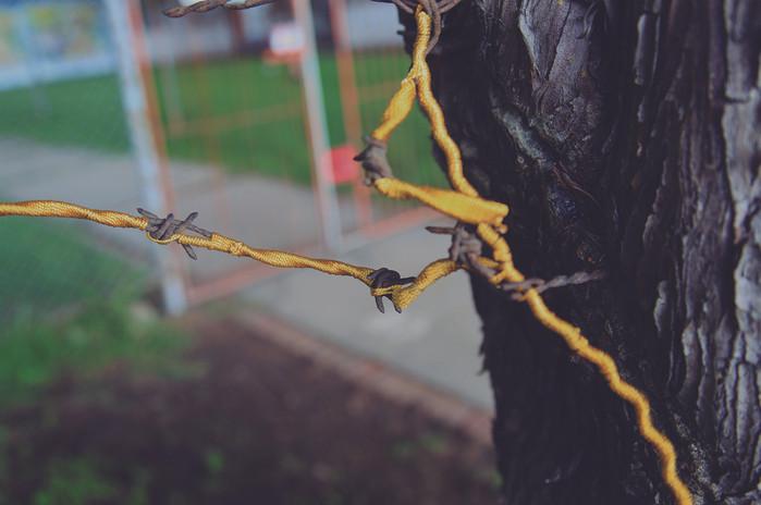 Andrea Marín Titulo: Cerca, muy cerca. Serie, pieza No. 4 Técnica: Serie, Fotografía digital C-Print Registro de Intervención en árboles del campus de la Universidad Nacional Hilos bordean la cerca de alambre incrustada en las cortezas de árbol por crecimiento natural de su tronco. Dimensiones: 36x50
