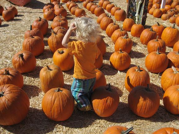 Cosi in Pumpkin Patch