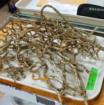 20140526_tubeworms2.jpg