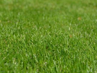 Güzel Çim Elde Etmenin İpuçları