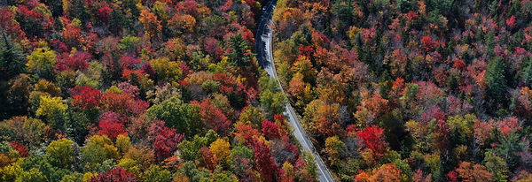 FallFoliage.jpg