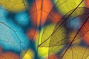 Ayurveda: Nature's Rhythm