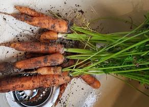 Spiritual Carrots