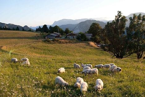 Moutons-la paix demenage.jpg