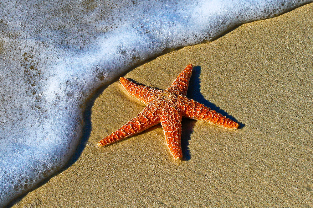 Starfish on Beach via Unsplash @peterlaster