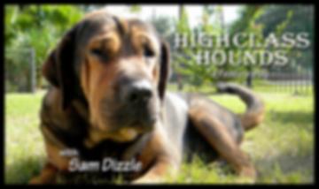 HighClassHounds, a dog blog