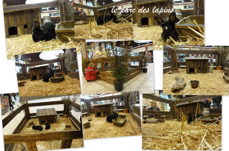 Le parc des lapins