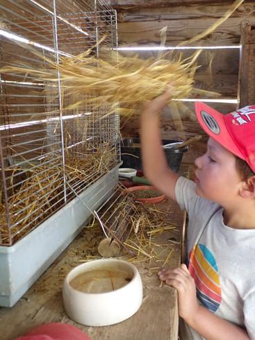 Entretien des clapiers des lapins