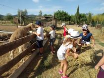 Nourrissage des animaux par les enfants