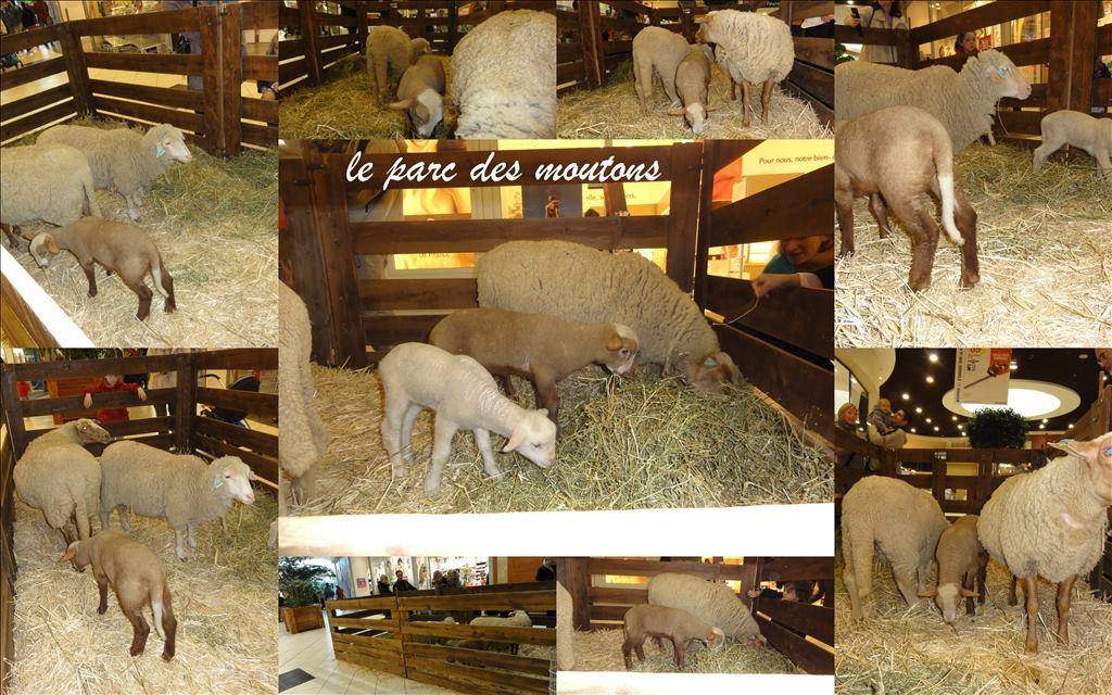 Le parc des moutons