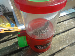 Utilisation d'une boite loupe pour observer les plumes