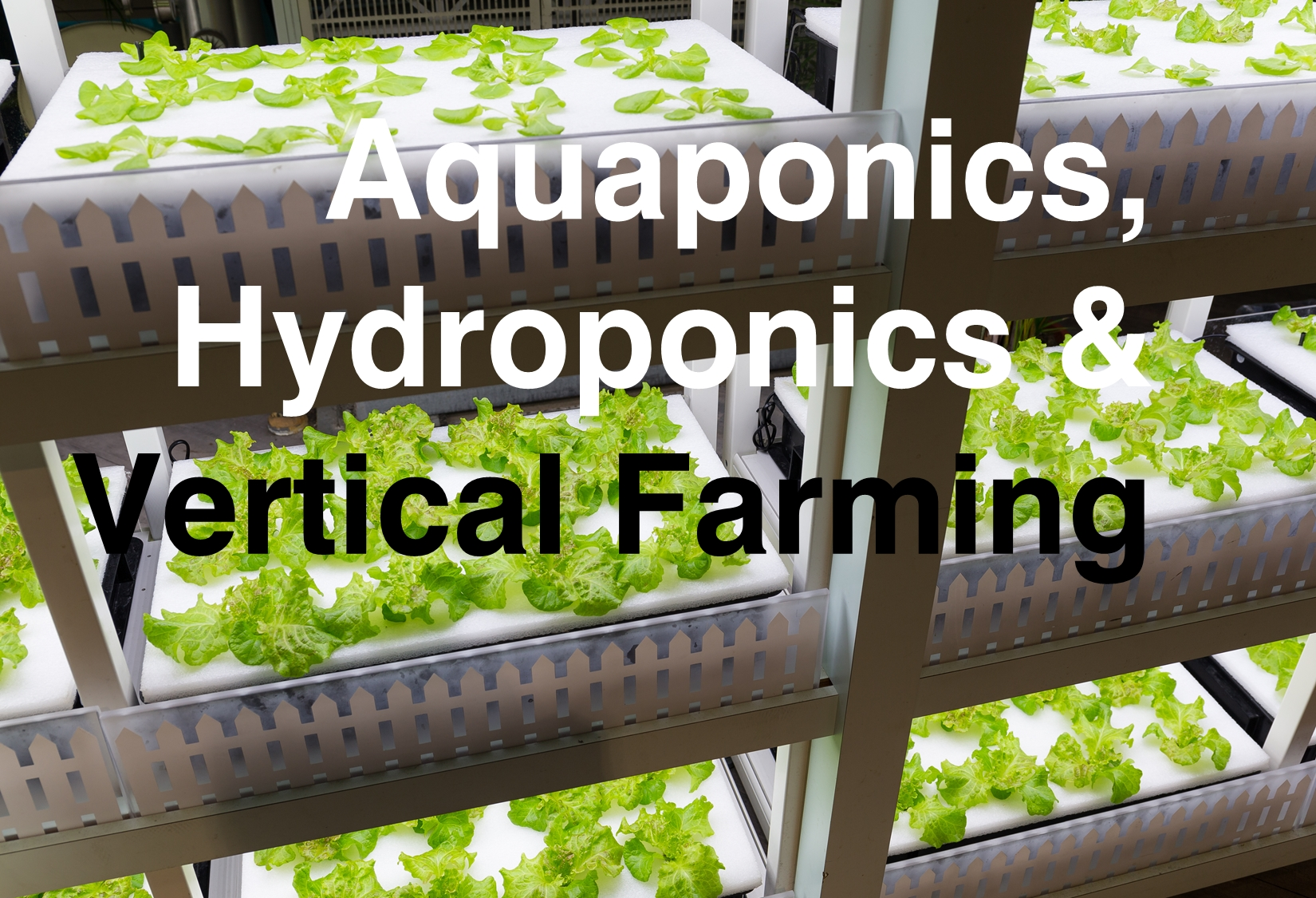 Aquaponics - Vertical Farming