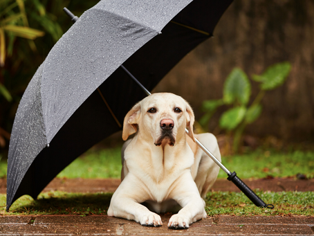 How The Rainy Season Can Affect Your Pet's Skin