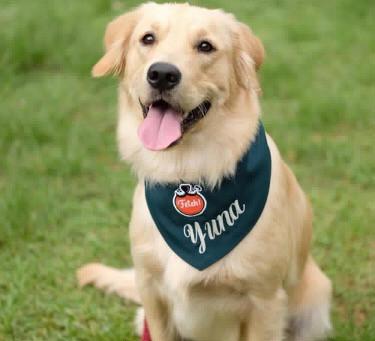 Entrepreneurship Has Gone to the Dogs! Meet Fetch! Naturals' Petpreneurs