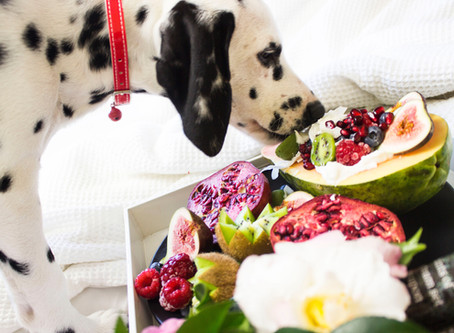 Yum! Human Foods That are Safe for Dogs